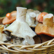 Basket of wild mushrooms — Stock Photo