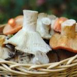 Basket of wild mushrooms — Stock Photo #2065166