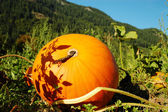 Sun decorated pumpkin — Stock Photo