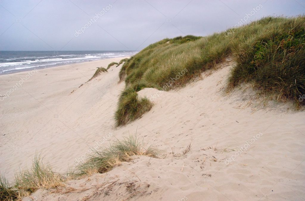 Oregon dunes landscape and the Pacific ocean coastline on a background — Stock Photo #2063923