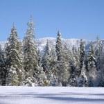 ������, ������: Snow Dale