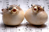 Fishy Duet — Stock Photo