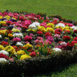 Stock Photo: Flowerbed