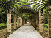Pergola in Athens, Greece — Stock Photo