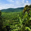 Stock Photo: Jungle view