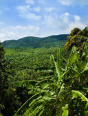 Jungle view — Stock Photo