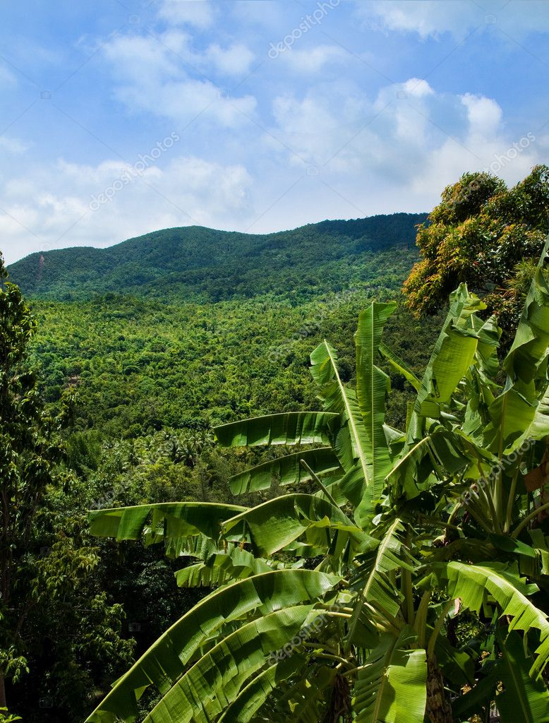 A view over the green jungle at Koh Phangan, Thailand  Stock Photo #2222348