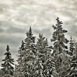 Winter scenery - Foto Stock