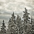 Winter scenery - Zdjcie stockowe