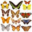 mariposas — Foto de Stock
