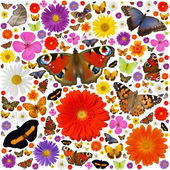 Butterflies and blooms — Stock Photo