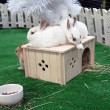 Stock Photo: New Year. Rabbit House 1.