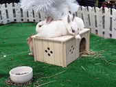New Year. Rabbit House 1. — Stock Photo