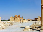 Palmyra - is a perl in the heat — Stock Photo