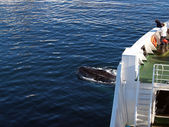 Whales - owners depths of the sea. — Foto de Stock