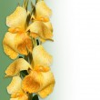 Floral Border yellow Canna lilies — Stock Photo #2126367