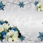 Christmas border white poinsettias — Stock Photo