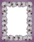 Floral Border Orchids purple — Stock Photo