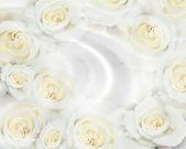 結婚式の招待状の白いバラ — ストック写真