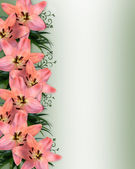 Pink Lilies Floral Border — Stock Photo