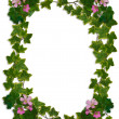 Ivy Border flowering clover — Stock Photo