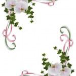 las orquídeas y la invitación de la boda de hiedra — Foto de Stock