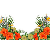 Tropical Hibiscus Flowers luau border — Stock Photo