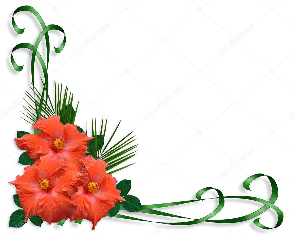 Hibiscus tropical flowers border stock image
