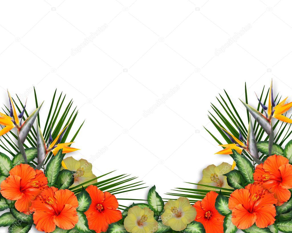 Tropical Hibiscus Flowers Luau Border Stock Photo