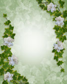 Floral Border Ivy and Gardenias — Stock Photo