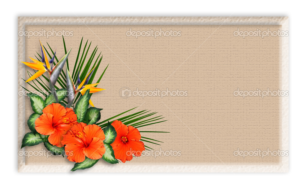 Custom Card Template standard greeting card size template : Tropical Flowers border Background u2014 Stock Photo u00a9 Irisangel ...