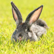 Rabbit — Stock Photo #2074814