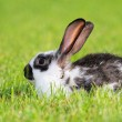 Rabbit — Stock Photo #2075142
