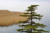 Lago ohrid — Foto de Stock
