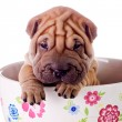 Stock Photo: Shar Pei baby dog in a large cup
