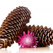 Couple of pine cones with a flower — Stock Photo