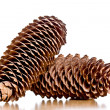 Stock Photo: Two pinecones