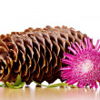 Pinecone, flower and leaves - Foto Stock