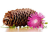 Pinecone, flower and leaves — Stock Photo