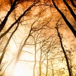Amazing summer sunset in forest. Sun ray - Stock Photo