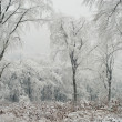 winter forest — Stockfoto #2006168