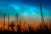 Burned forest — Stock Photo