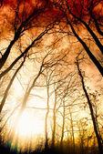 Erstaunliche sommer sonnenuntergang im wald. sonnenstrahl — Stockfoto