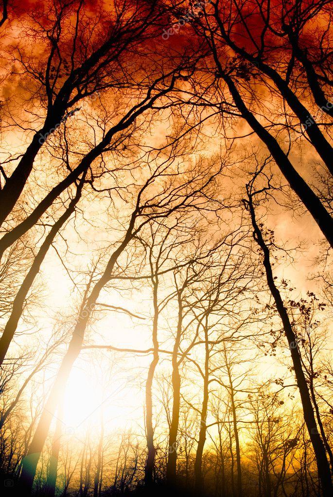 Фотообои Удивительный летний закат в лесу. Луч солнца