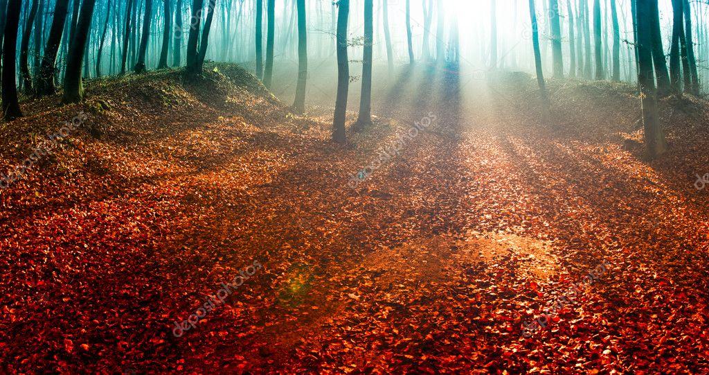 Фотообои Удивительный летний закат в лесу.