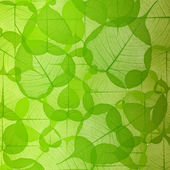 Leaf background green color — Stockfoto