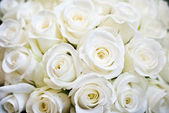 White Rose Background — Stock Photo