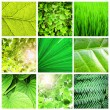 Stock Photo: Green leaf collection