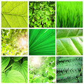 Green leaf collection — Stock Photo