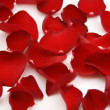 Bright red petals - Stock Photo